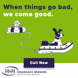 graphic design for H&H Insurance Brokers